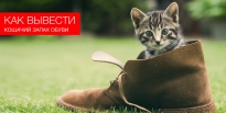 Как можно вывести кошачий запах обуви